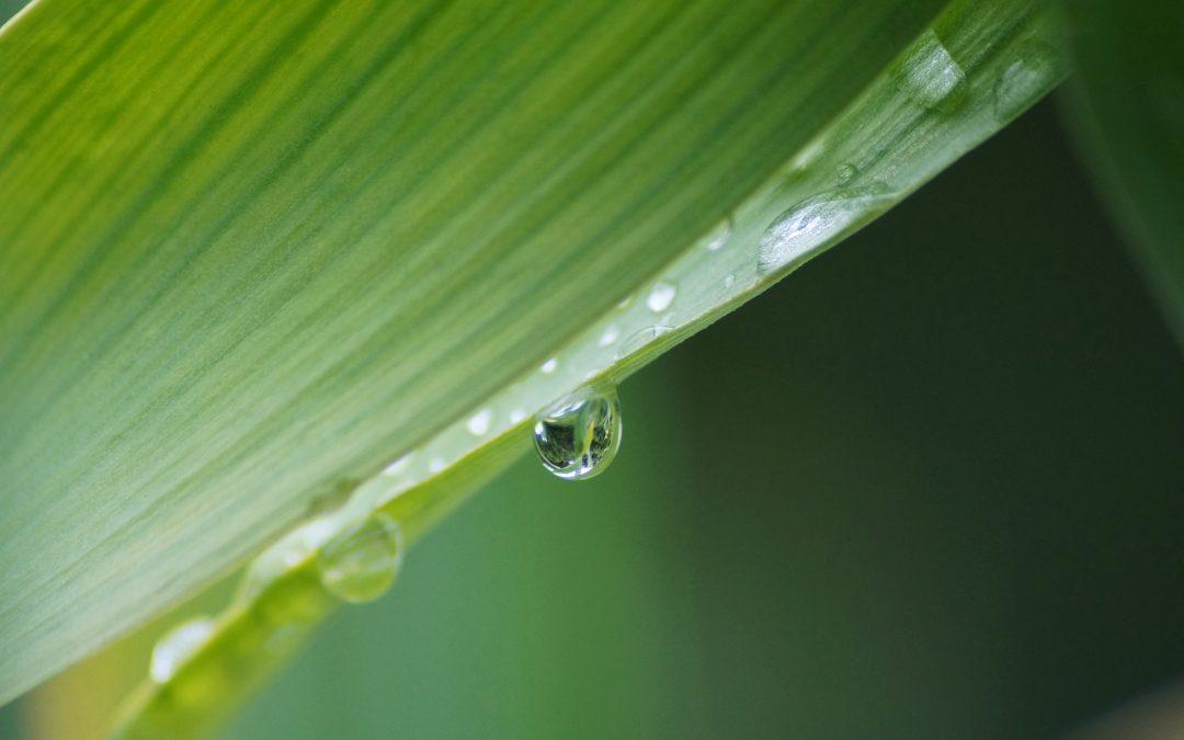 Planta Aloe vera en casa, nos agradecerás el consejo.